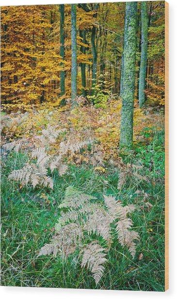 Fall Scenery Wood Print by Maciej Markiewicz