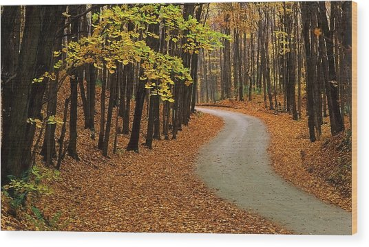 Fall Winding Road  Wood Print