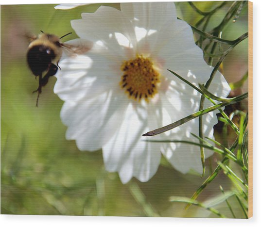 Flower And Bee Wood Print by Christy Woods
