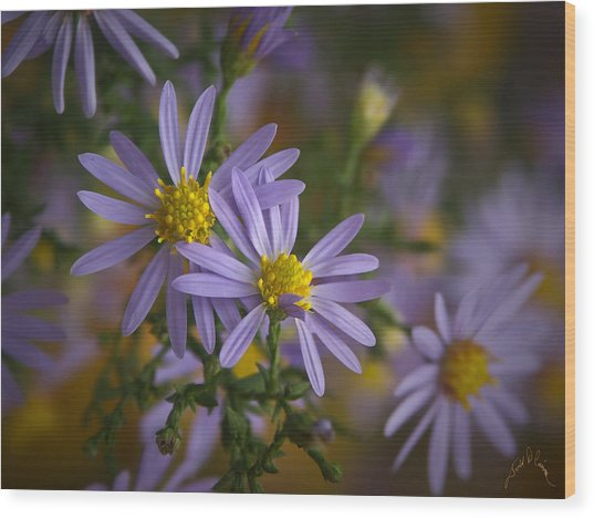 Flowers On Blue Ridge Parkway Wood Print by Williams-Cairns Photography LLC