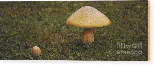 Fly Amanita Wood Print