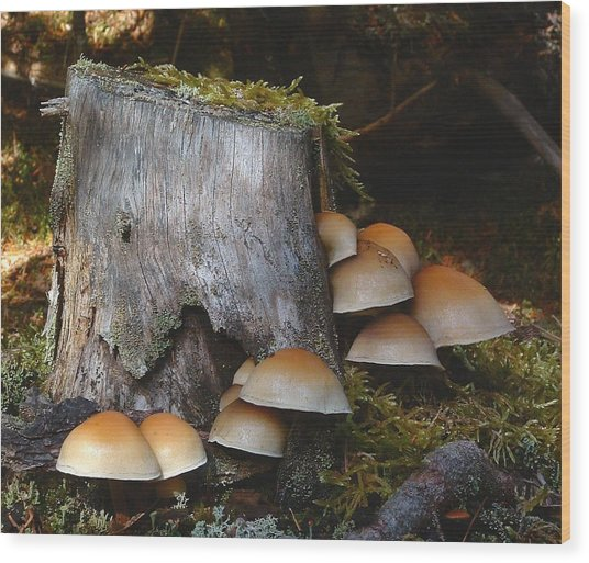 Fungus Unamed Wood Print