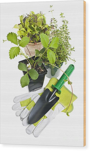Gardening Tools And Plants Wood Print