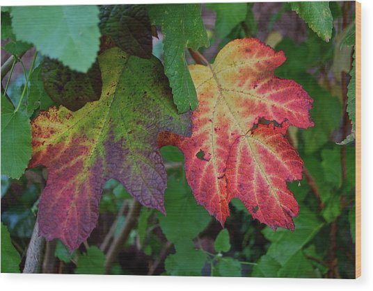 Grape Leaves Wood Print by Lori Leigh
