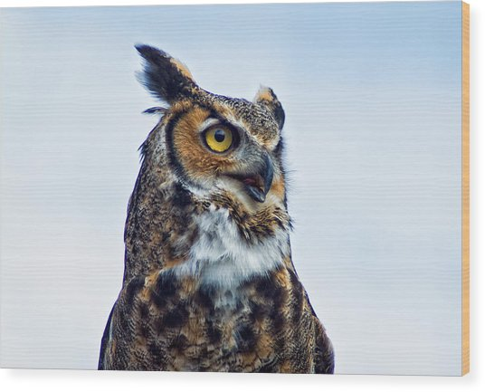 Great Horned Owl Wood Print by Linda Pulvermacher