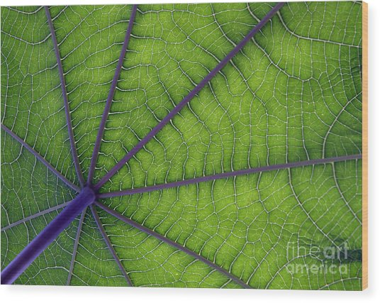 Green Leaf Wood Print by Urban Shooters