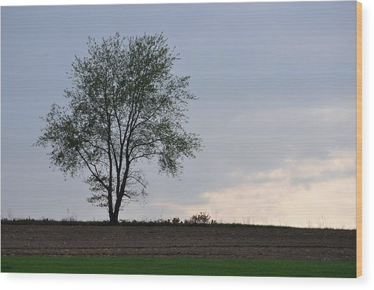 Horizon In April Wood Print by JAMART Photography