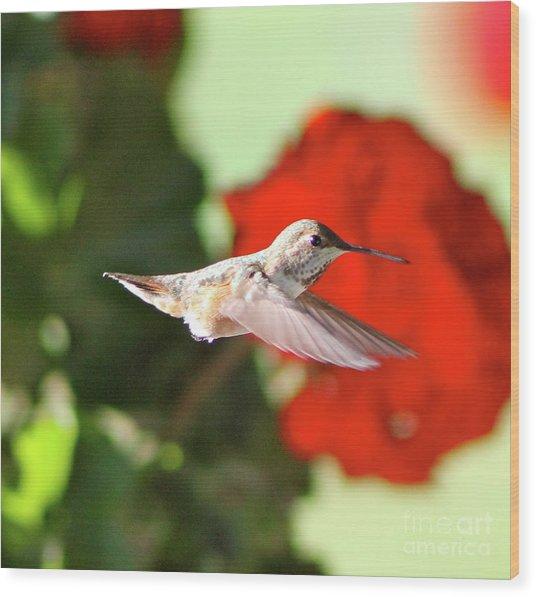 Hummingbird 4 Wood Print
