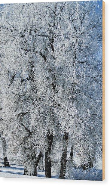 Iced Wood Print