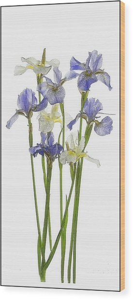 Irises In Blue And Yellow  Wood Print