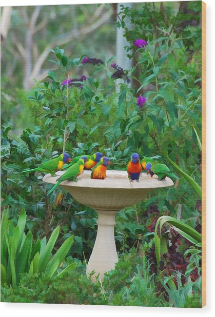Lorikeets And Rosellas Wood Print