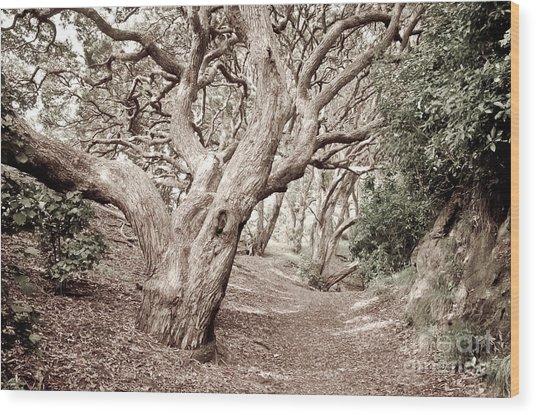 New Zealand Rainfores With Pohutukawa Trees Wood Print