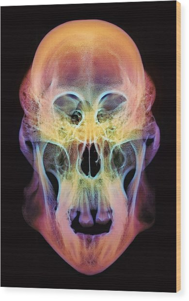 Orangutan Skull Wood Print by D. Roberts