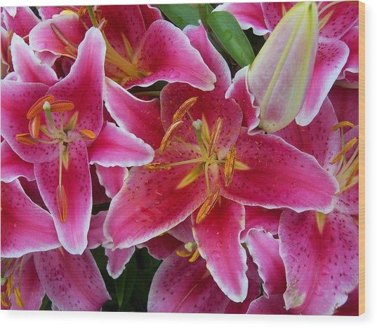 Pink Lilies With Water Droplets Wood Print
