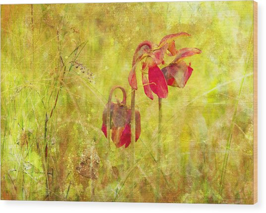 Pitcher Plant Wood Print