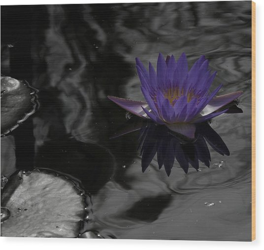 Purple Lilly In A Pond Wood Print