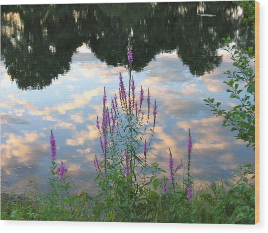 Purple Loosestrife Wood Print