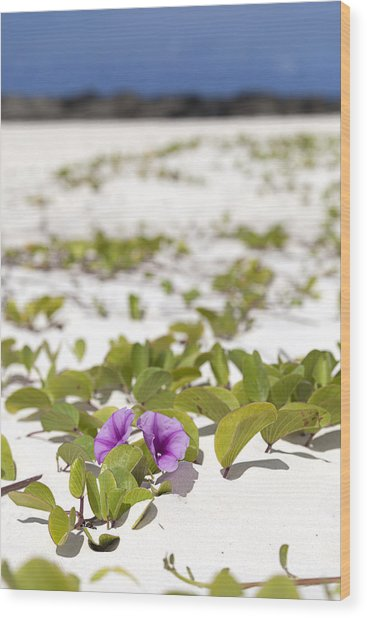 Railroad Vine Blossom Wood Print