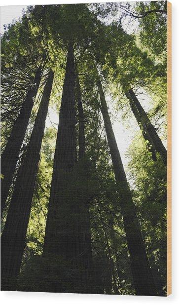 Red Woods Wood Print