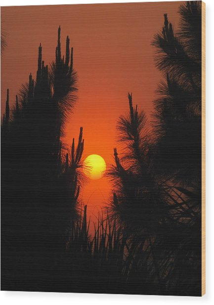 Rise And Pine Wood Print