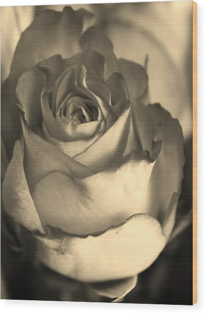 Rose In Sepia Wood Print by Bruce Bley
