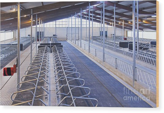 Row Of Cattle Cubicles Wood Print by Jaak Nilson