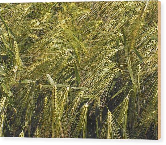 Rye Wood Print by Design Windmill