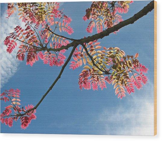 Santa Barbara California Fine Art Print Wood Print by Ian Stevenson