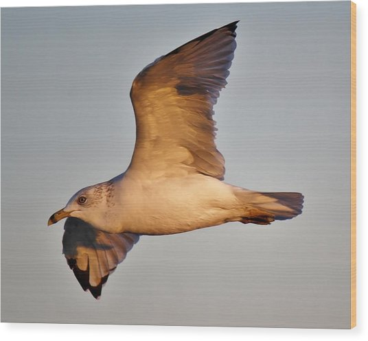 Sea Gull At Twilight Wood Print by Paulette Thomas
