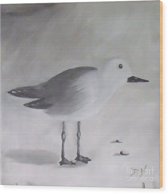 Seagull Wood Print by Debra Piro