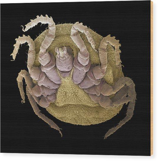 Sheep Tick, Sem Wood Print by Steve Gschmeissner