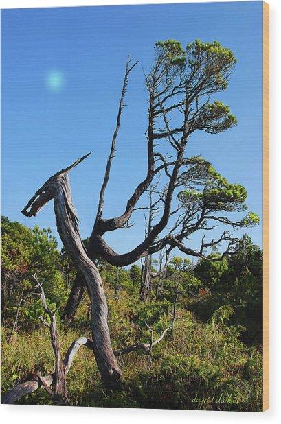 Shorepine Bog Wood Print by Dayvid Clarkson