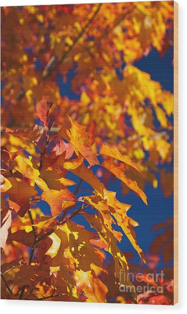 Sierra Autumn Leaves In Orange And Gold Wood Print by ELITE IMAGE photography By Chad McDermott