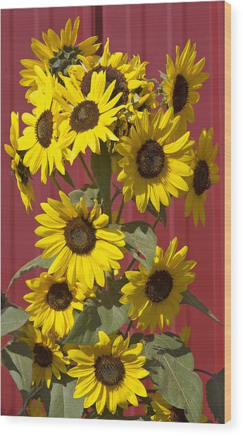 So Many Sunflowers Wood Print