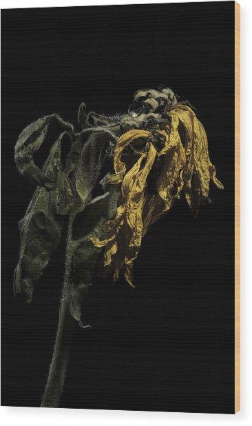 Sunflower Wood Print by Nathaniel Kolby