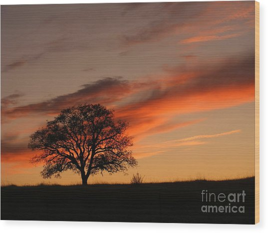 Sunset Tree Wood Print