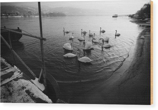Swans On River Danube Wood Print by Tibor Puski
