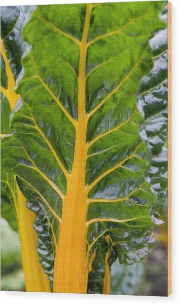 Swiss Chard 'bright Yellow' Wood Print by Jon Stokes