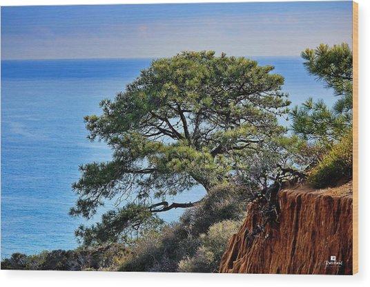 Torrey Pines Wood Print