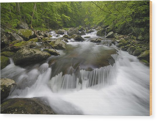 Tremont Spring In Great Smoky Mountains Wood Print by Darrell Young