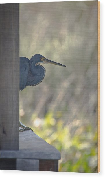 Tricolored Heron Wood Print by Bill Martin