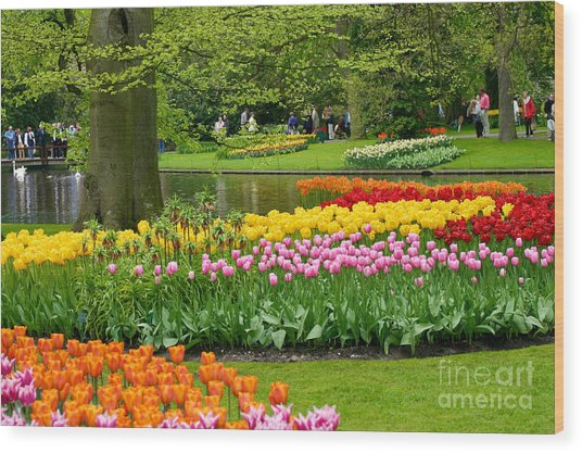 Tulip Garden  Wood Print by B S Karan