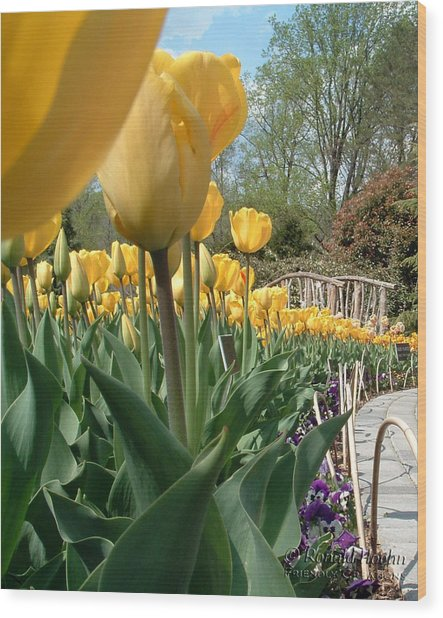 Tulips On Parade Wood Print