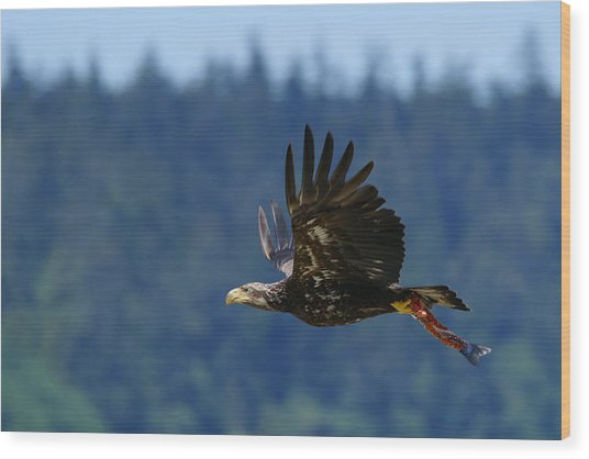 Wa-6-12-neah Bay-eagleimm2 Wood Print