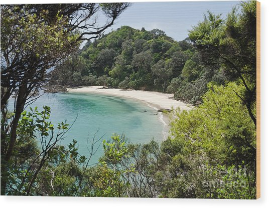 Whale Bay In New Zealand Wood Print