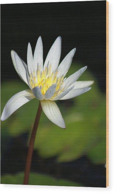 White  Wood Print by Margaret Steinmeyer