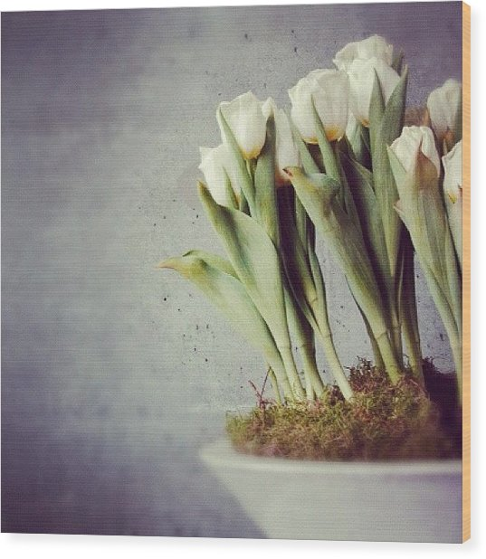 White Tulips In Bowl - Gray Concrete Wall Wood Print
