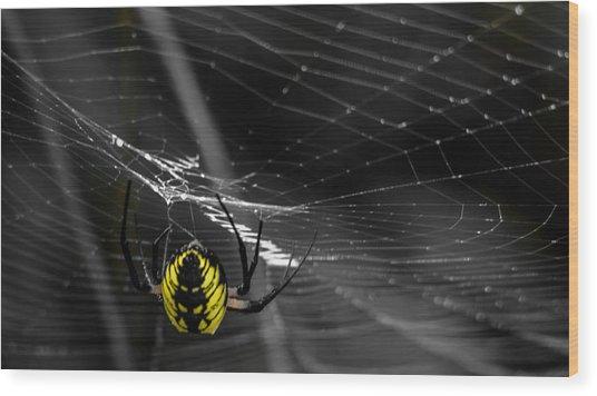 Wicked Web Wood Print by Brian Stevens