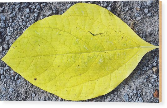 Yellow Leaf Wood Print