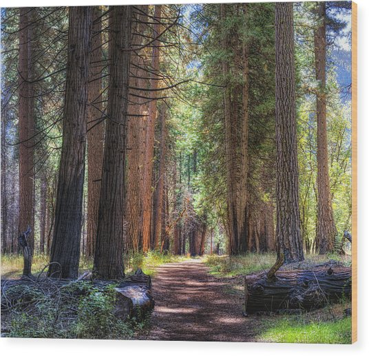 Yosemite Trail Wood Print by Stephen Campbell